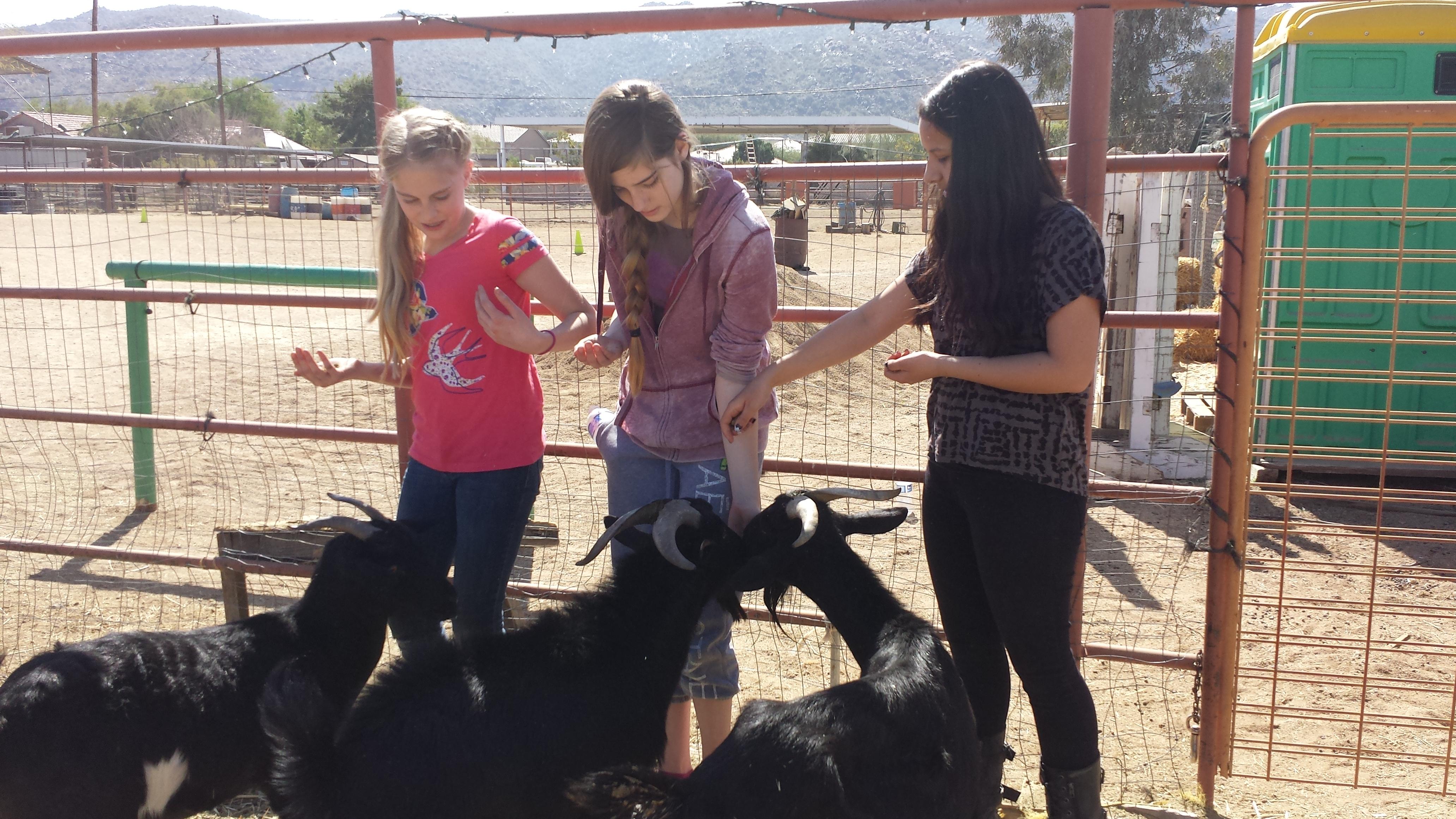 Feeding animals at Robinson Ranch